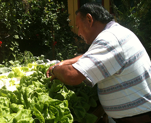 Local farmer, Sid Cabrera, explains to CNMI CHL staff how he uses Nutrient Film Technique Hydroponics demonstrated to him by NMC-CREES. A combination of the pictured technique with aquaponics is slated to be used at two village sites as part of the Intervention phase of the CHL program.