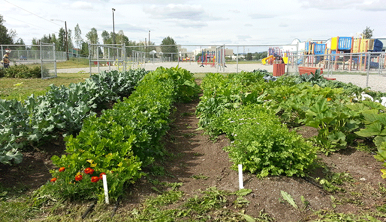 Hunter School Garden will provide good food for the community.