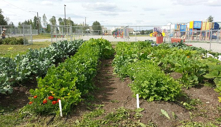 Hunter School Garden will provide good food for the community.