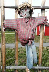 Scarecrow at Randy Smith  Garden protects the growing crop.